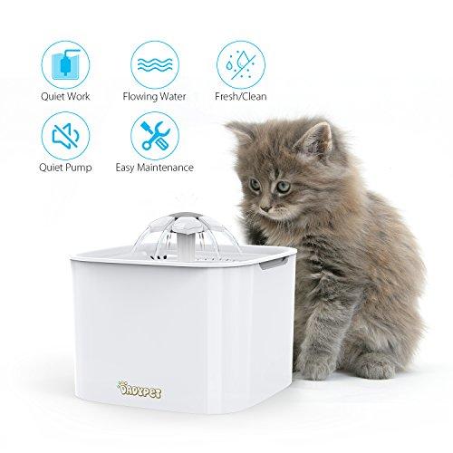 gatto con la sua fontanella