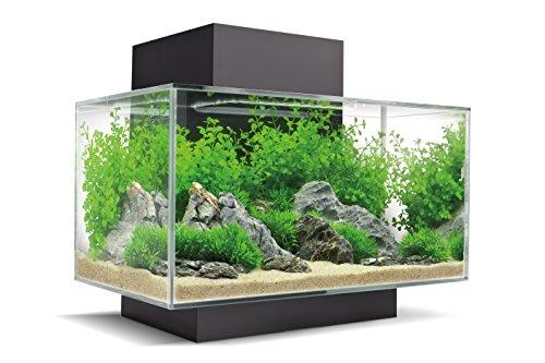 acquario fluval con rocce
