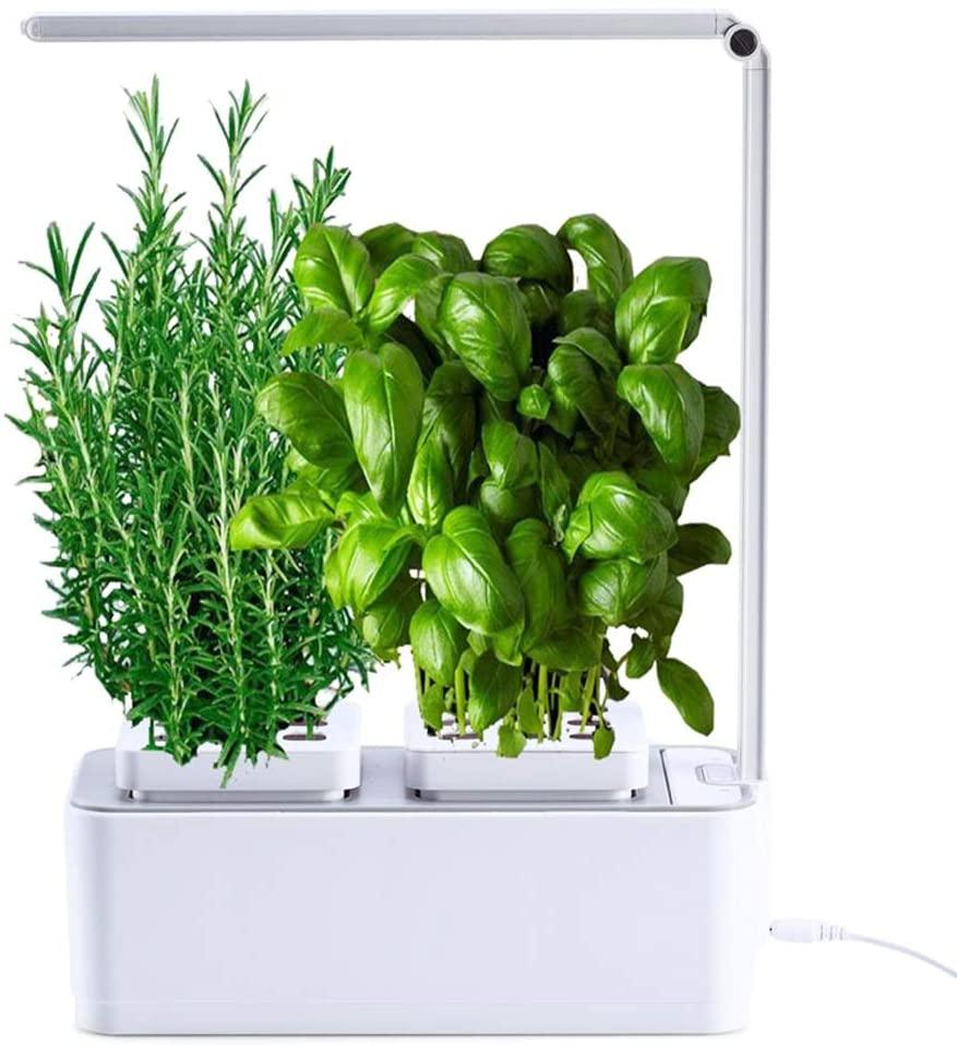 serra idroponica per coltivare in casa